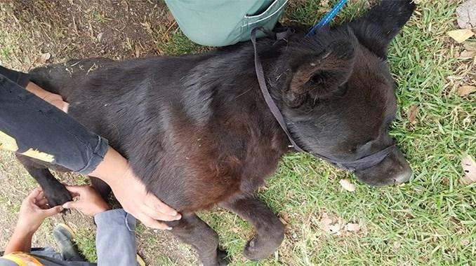 20 perros mueren envenenados en Quito