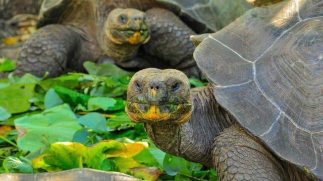 Las Islas Galápagos en peligro de desaparecer