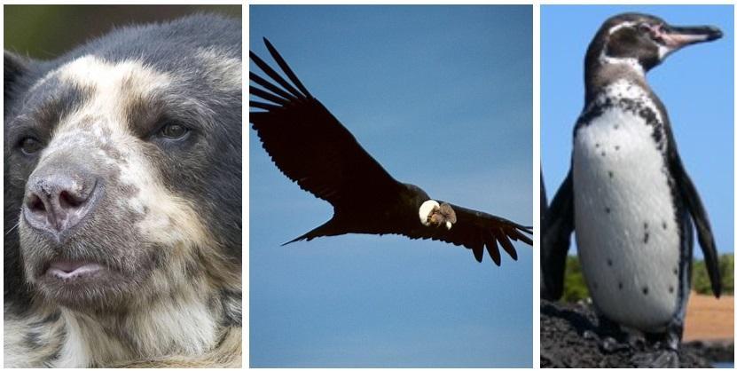 animales peligro extincion Ecuador